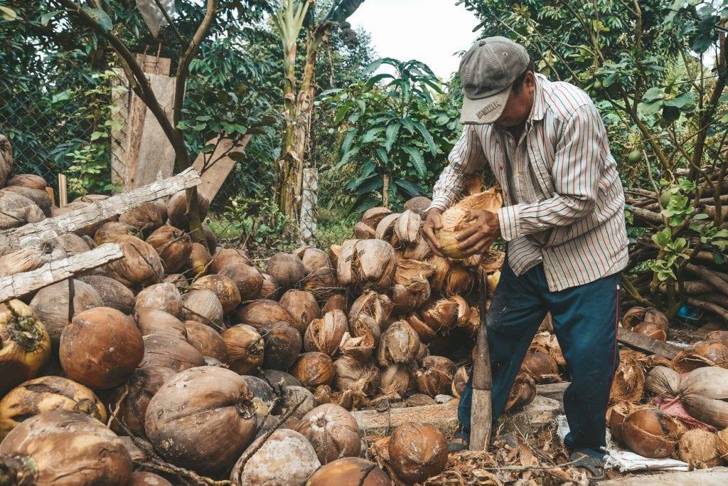 Coconut Farm in de Mekong Delta, Vietnam.