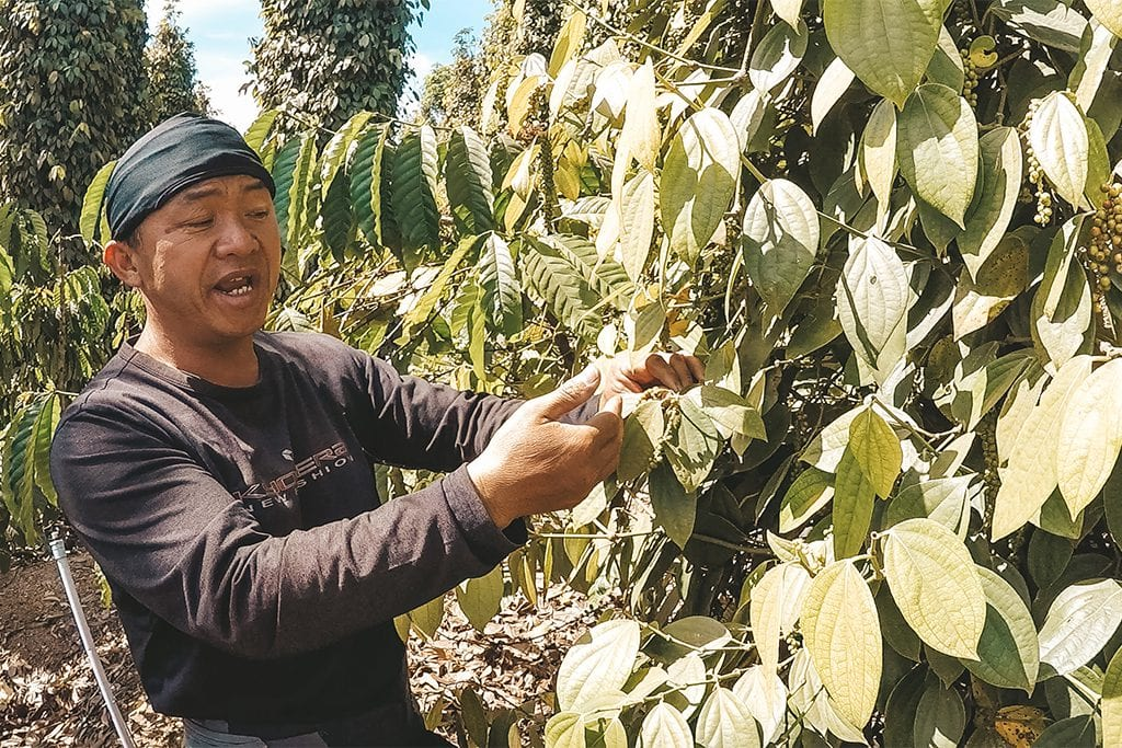 Mister Viet peperplantage.