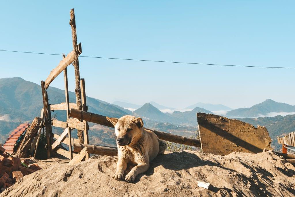 Hond uitzicht bergen Sapa.