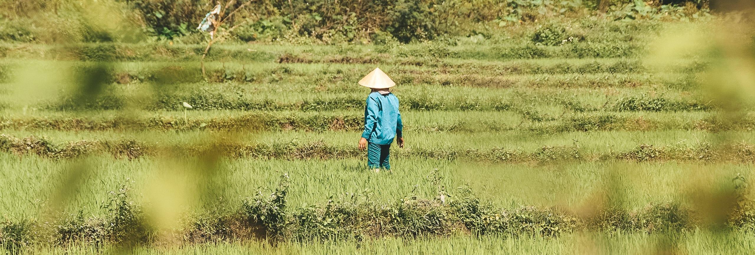 Vietnam rijstvelden.