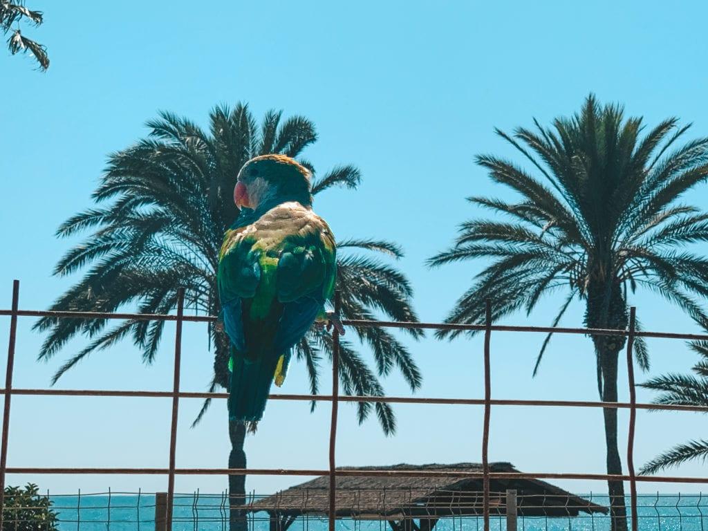 Stranden Malaga.