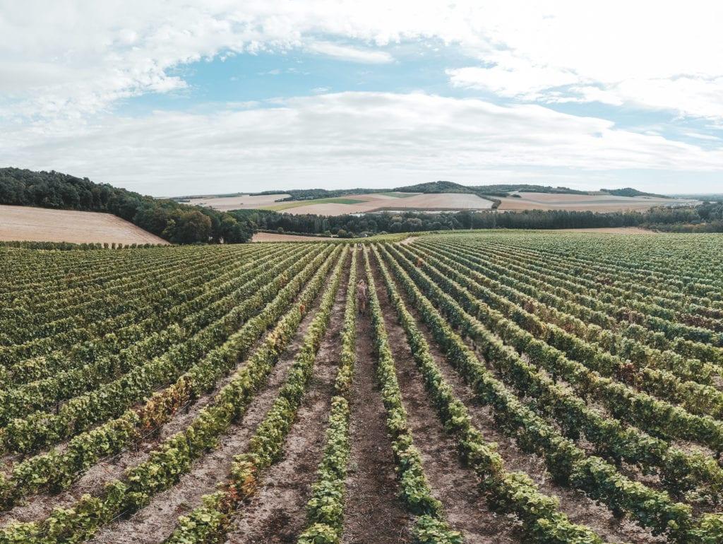 Wijnvelden Champagne regio.